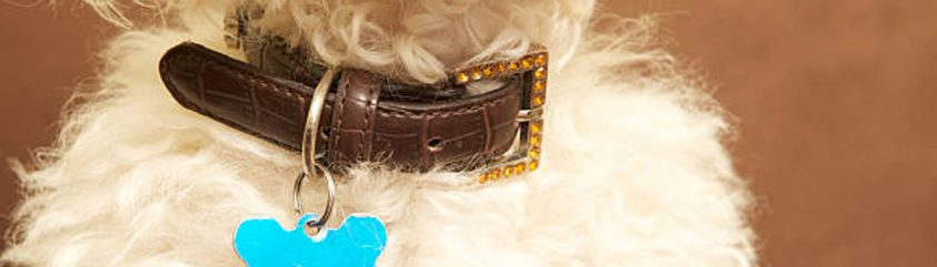 Collars, Leads & Accessories